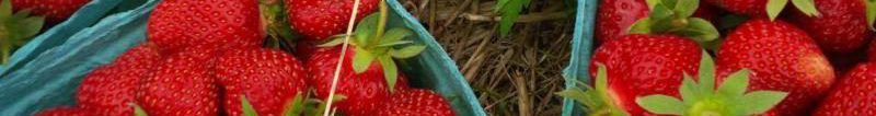 cropped-berries-in-da-field.jpg